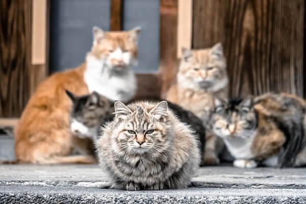 空き家の天敵!野良猫の被害と対策