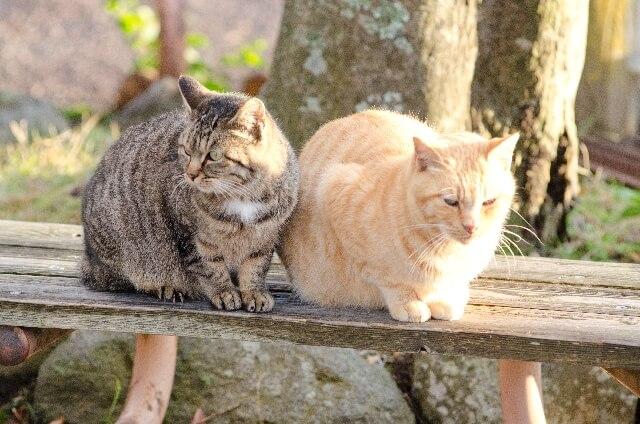 空き家に住む野良猫