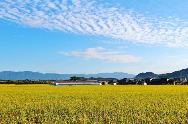 農地の相続に納税の猶予があるって本当?詳しく知りたい制度の概要!