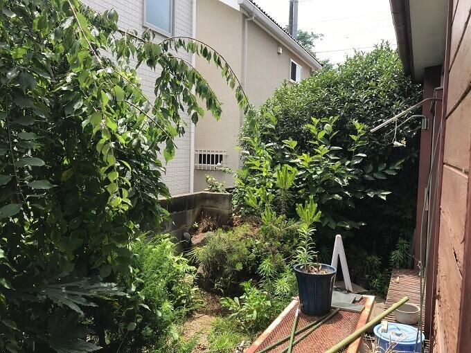 お庭の写真